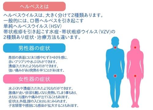 精 器 ヘルペス 男性 症状